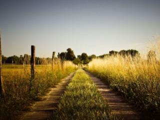 обои Дорога через поле фото