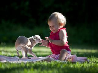обои Ребенок и собачка на травке фото