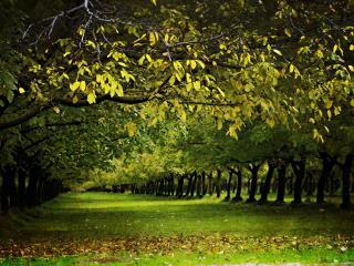 обои Ряды зеленых насаждений фото