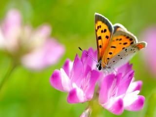 обои Бабочка и цветок фото