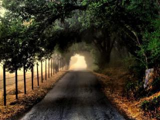 обои Дорога под ветками деревьев фото