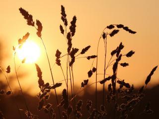 обои Последние лучи солнца фото