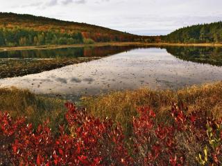 обои Осень у озера лесного фото