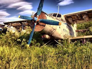 обои Стоят старые самолеты в траве АН-2