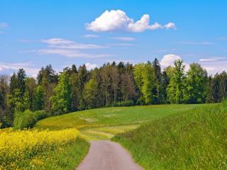 обои Дорога ведет в зеленый лес фото