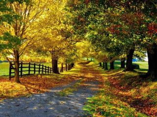 обои Осенняя деревенская дорога фото