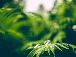 обои Мыльные пузыри на листе папоротника фото