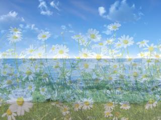 обои для рабочего стола: На фоне моря весна в цвеетах