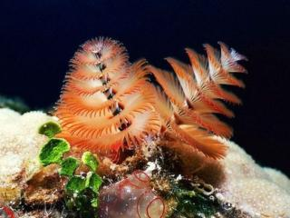 обои Краски подводного мира фото