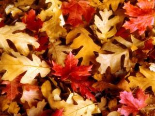 обои Осенний ковёр фото