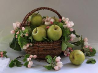 обои Натюрморт - Яблочный цвет и яблоки фото