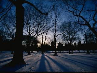 обои Зимний закат среди деревьев фото