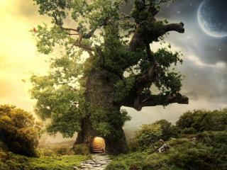 обои Дерево с входом под вечер фото