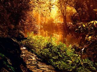 обои Солнце светит сквозь деревья, у осеннего пруда фото