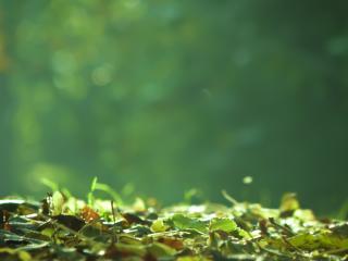 обои Листья в лучах осеннего солнца фото