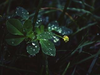 обои Росинки на листьях травы фото