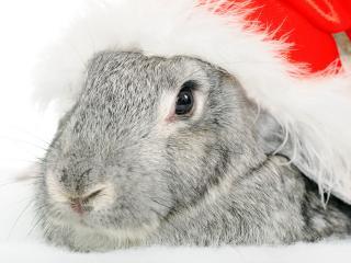 обои Новогодний кролик фото