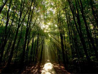 обои В дебрях дикого леса фото