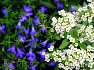 обои Красивые белые полевые цветы фото