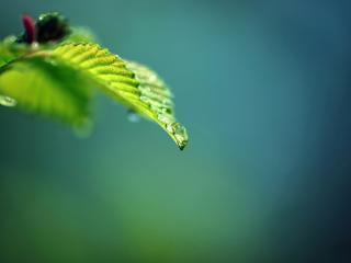 обои Вид зеленого листика с росой фото