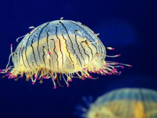обои Медуза «цветочная шляпка» фото