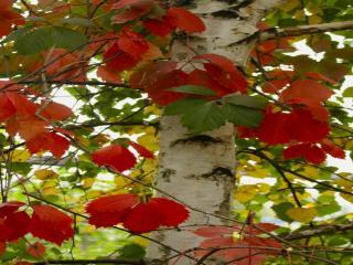 обои Осеннее разнокрасье фото