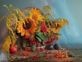 обои Натюрморт - Подсолнухи и ягоды, осенний фото