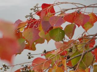 обои Осенняя веточка с ягодами фото