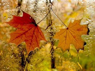 обои Осенний вернисаж фото