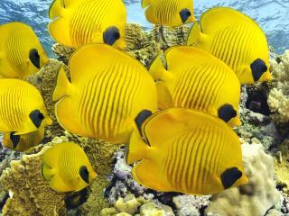 обои Стайка рыб у дна океана фото