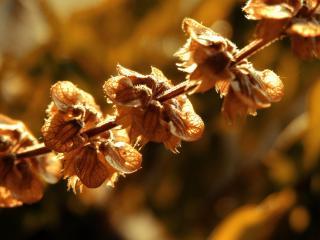 обои Сухой стебель растения в солнечных бликах фото