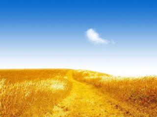 обои для рабочего стола: Тропа в желтом поле