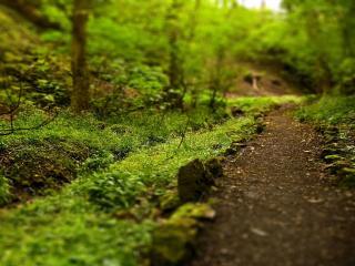 обои для рабочего стола: Тропинка в зеленом лесу