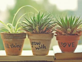 обои Три горшочка с растениями фото