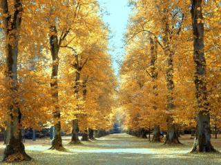 обои Липовая аллея осенью фото