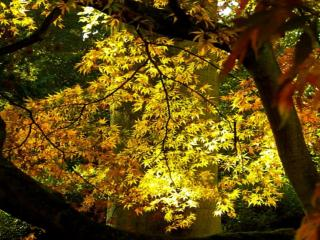 обои Лучи на осенних листьях фото