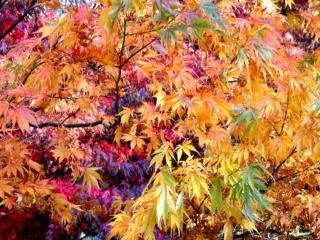 обои Осень разноцветная фото
