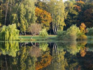 обои Прозрачный осенний пруд фото
