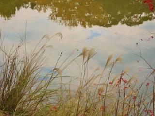 обои Осенняя травка у пруда фото