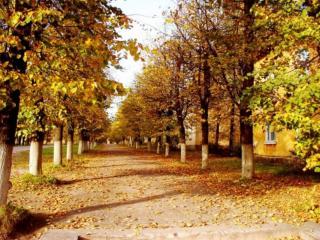 обои Осень в городе фото