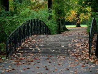обои Парковый мост фото