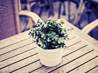 обои На столике в кафе стоит горшок с зеленым растением фото