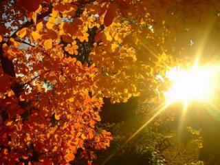 обои Солнце и осиновые листья фото