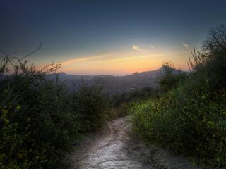 обои Тропа летней порою на закате дня фото