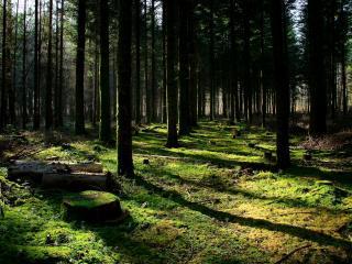 обои Лес после вырубки небольшой фото
