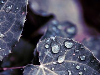 обои Росяные капельки на листах растения фото