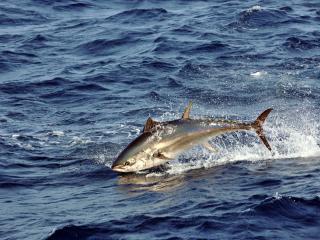 обои Акулы полет над водой фото