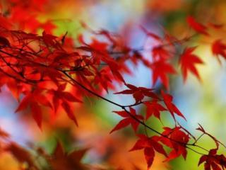 обои Осенняя красная веточка фото