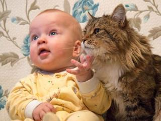 обои Я и мой кот фото