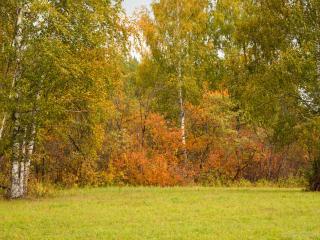 обои для рабочего стола: Начало осени в лесу